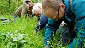 Foraging courses