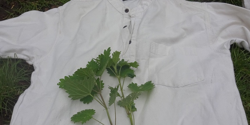 Stinging nettle dye: Capturing that spring green