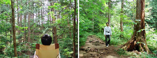 Japanese style Forest Bathing