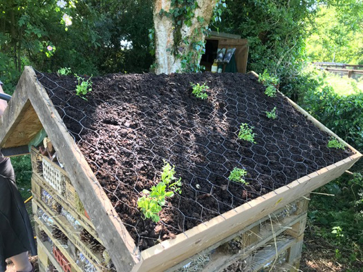 Planting the green roof