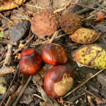 Conkers and Husk