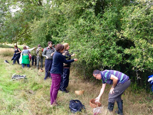 Group at the hedgerow, on a foraging course in Oxfordshire