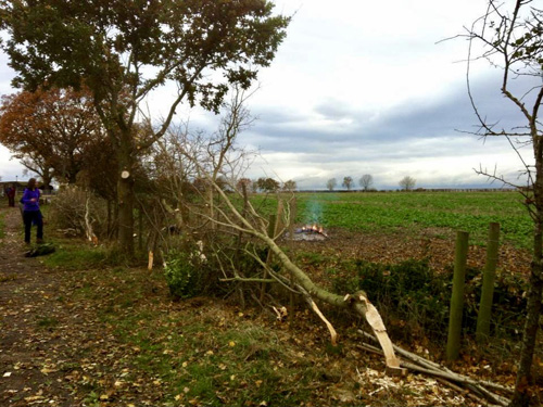 Volunteer group hedge laying