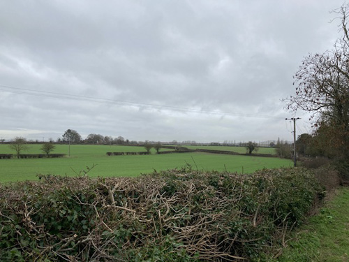 Straight line hedgerow planted to divide fields
