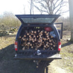 Firewood for next winter