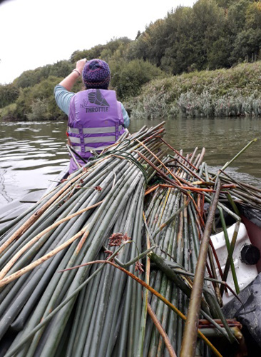 Combining nature enjoyment and sustainably harvesting weaving materials