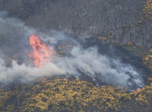 Controlled fire as part of heather restoration
