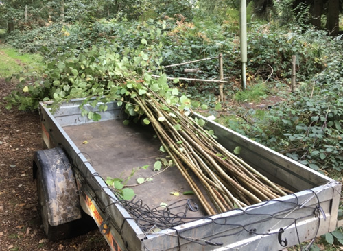 Working through coppiced material for a roof structure