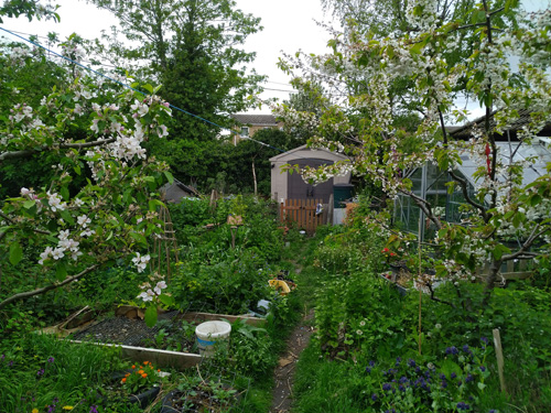 Apple and cherry trees with food below.