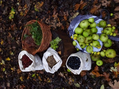 Autumn Foraging Course - Main Photo