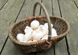 Handcrafted Willow Foraging/Mushroom Basket/Trugs