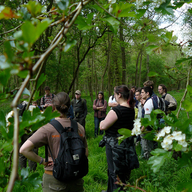 A Half Days Gentle Forage - Wild Food Foraging Course