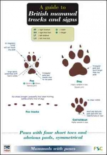 FSC- A guide to British Mammals - Tracks & Signs