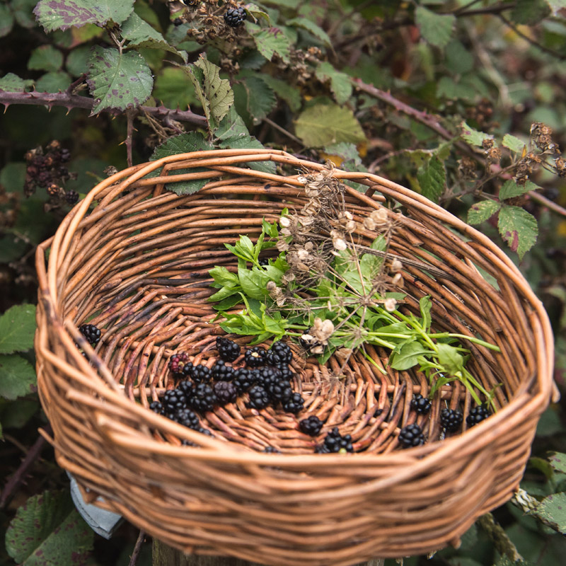 Autumn Foraging Course