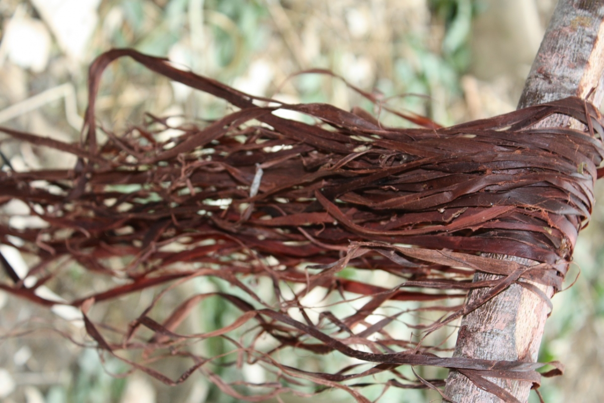Basketry and bark work weekend - Photo 1