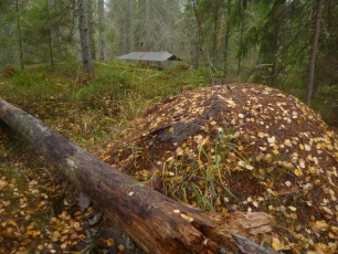 Canoeing and Camp Craft in Sweden - Photo 1